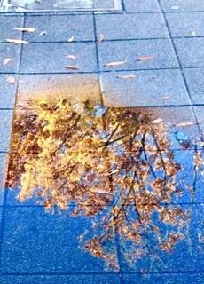 歩道の紅葉.jpg