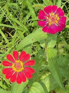 けふの花.jpg