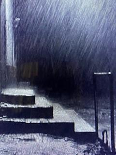 サタンタンゴ雨.jpg
