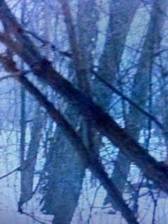 凍った森.jpg
