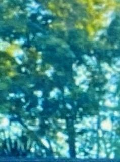 夢の森.jpg