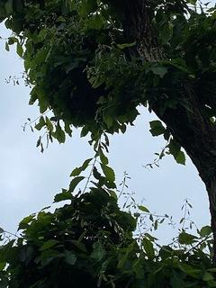 樹間.jpg