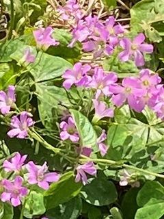緑道の花 528.jpg