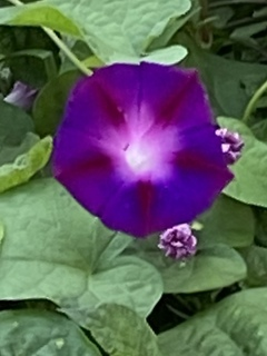 grの花.jpg